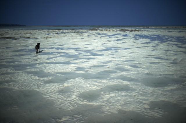 Остров Заброшенных Собак 4