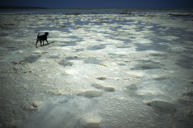 Остров Заброшенных Собак 7