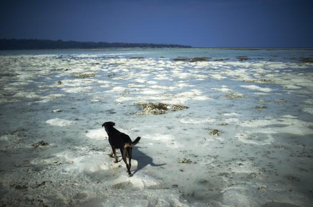Остров Заброшенных Собак 9