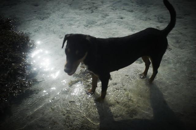 Остров Заброшенных Собак 21