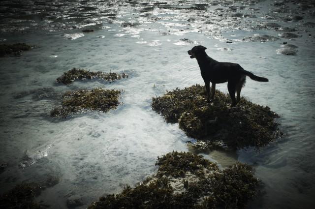 Остров Заброшенных Собак 30
