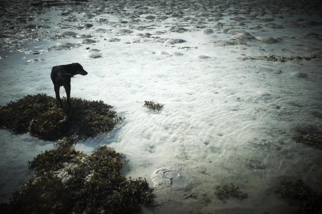Остров Заброшенных Собак 31