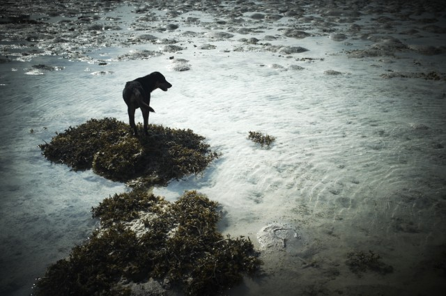 Остров Заброшенных Собак 33