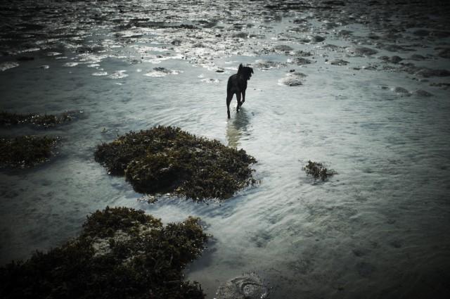 Остров Заброшенных Собак 34