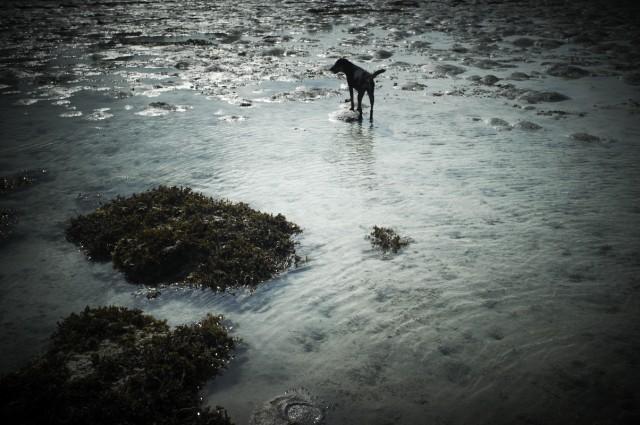 Остров Заброшенных Собак 35