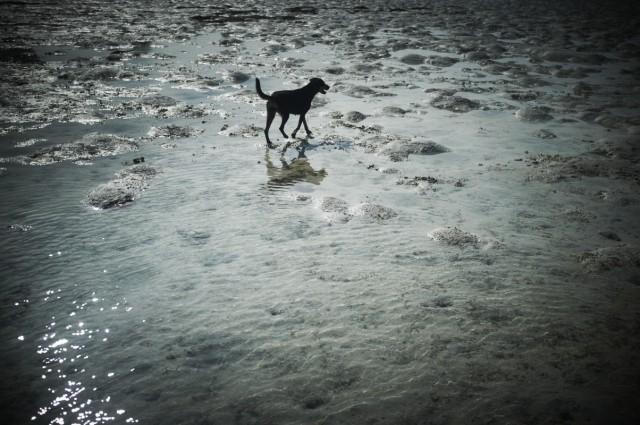 Остров Заброшенных Собак 36