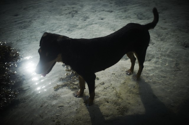 Остров Заброшенных Собак 23