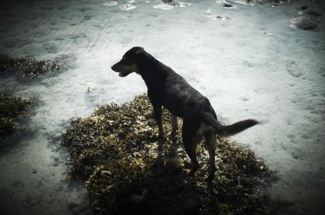 Остров Заброшенных Собак 25