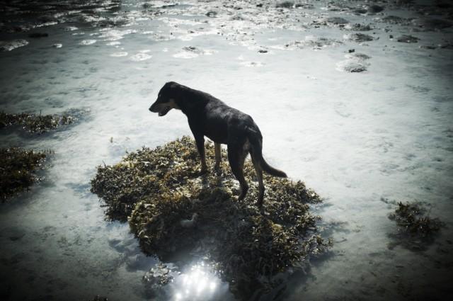 Остров Заброшенных Собак 26