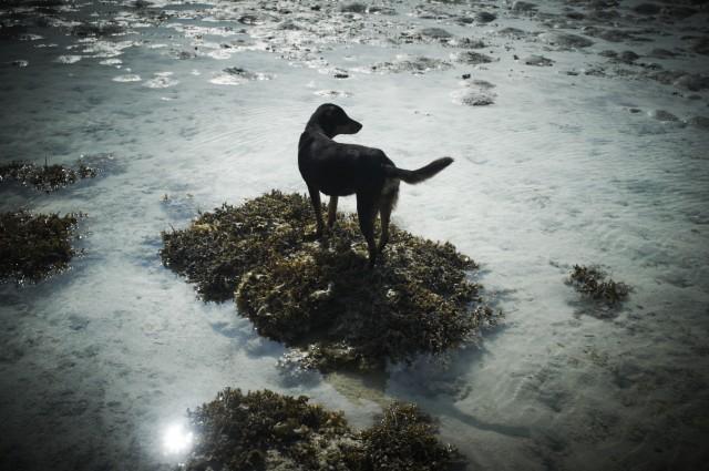 Остров Заброшенных Собак 27
