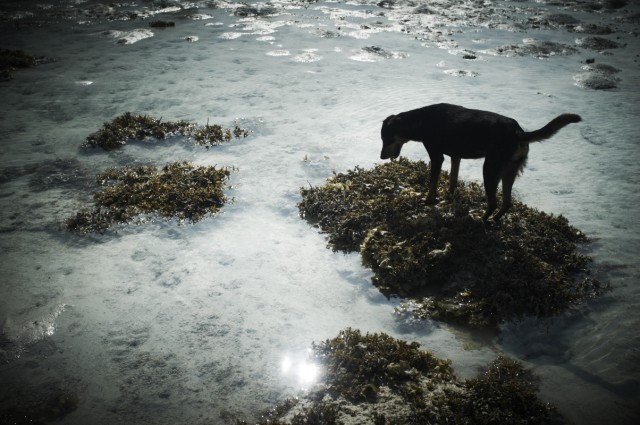 Остров Заброшенных Собак 28