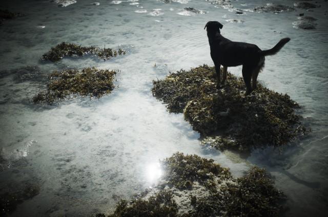 Остров Заброшенных Собак 29