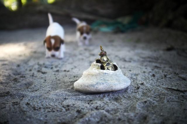 Остров Заброшенных Собак 37