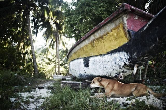 Остров Заброшенных Собак 51