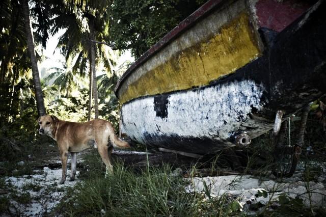 Остров Заброшенных Собак 52