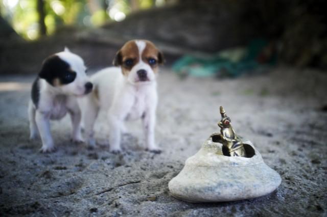Остров Заброшенных Собак 39