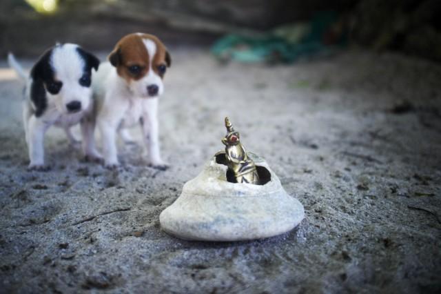 Остров Заброшенных Собак 40