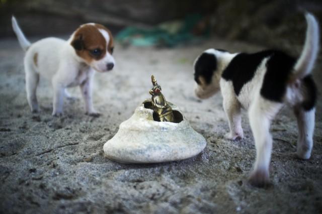 Остров Заброшенных Собак 41