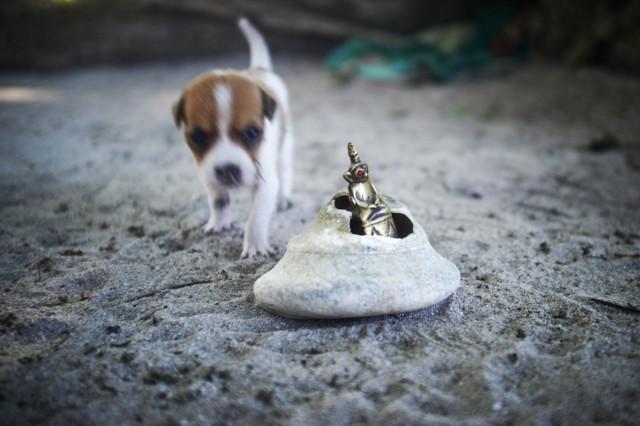Остров Заброшенных Собак 43