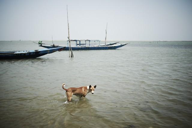 Остров Заброшенных Собак 53