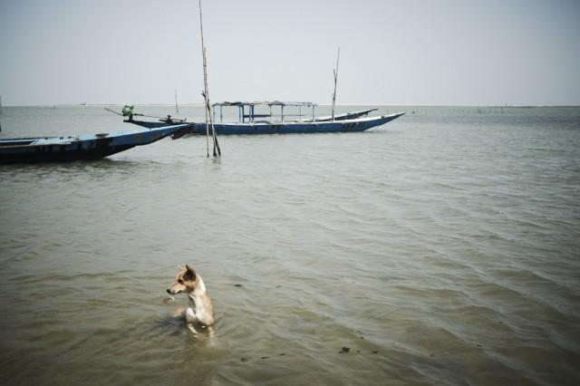 Остров Заброшенных Собак 54