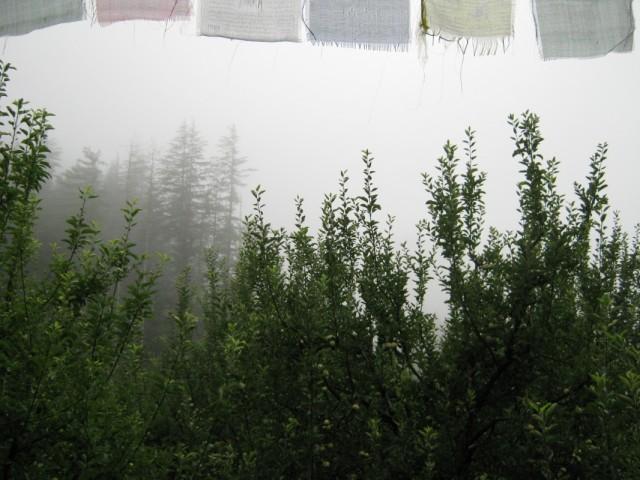туман в райском саду