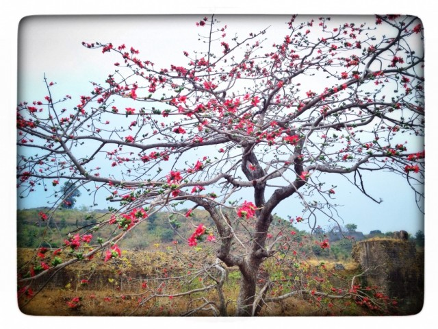 Ранняя весна в Манду