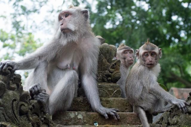 Monkey Forest 01