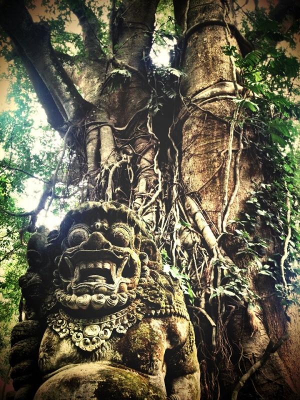 Monkey Forest 10
