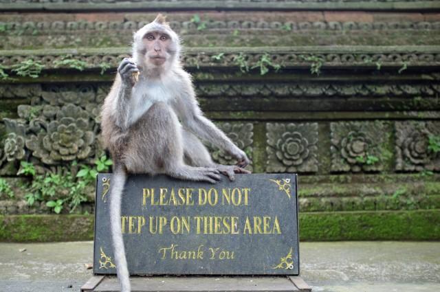 Monkey Forest 02