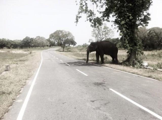 Дороги Шри-Ланки