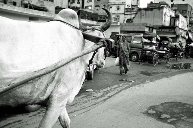 В Гималаи!