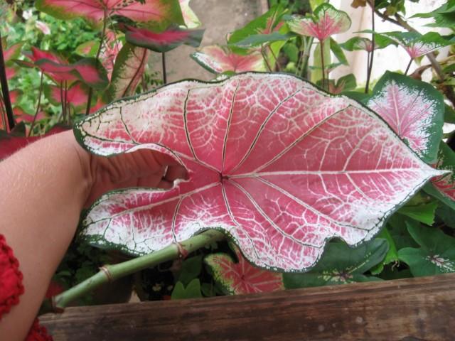 растение возле особняка Браганзы