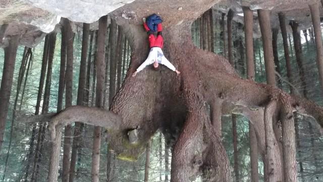 сходить в лес за деревом