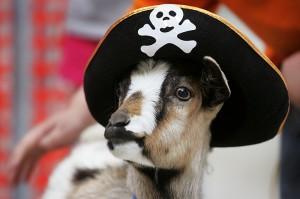 Пиратская Коза
