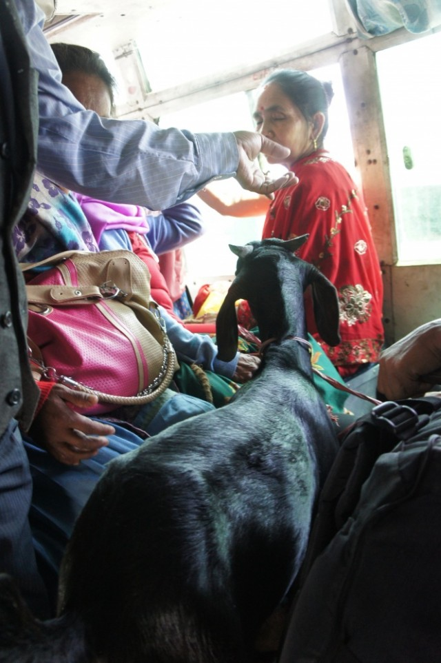 В автобусе из Покхары в Наяпул - все на местах))