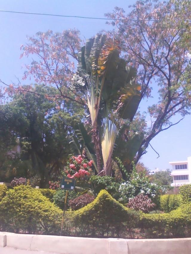 Интересное растение в ашраме