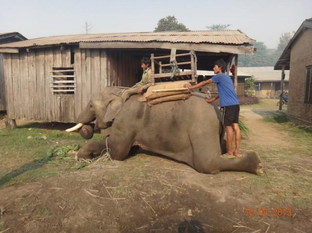 Опять слоны