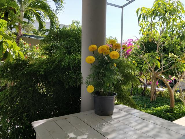 Обеденный стол с видом на сад