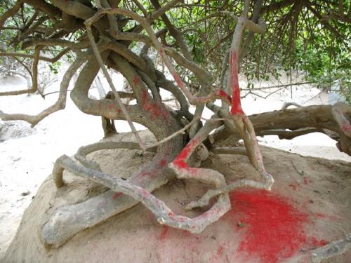 Дерево в Нидхуване, посыпанное киноварью