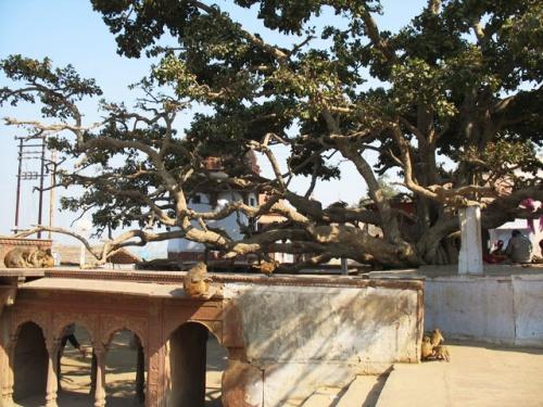 Чир-гхат: место, связанное с играми Кришны.