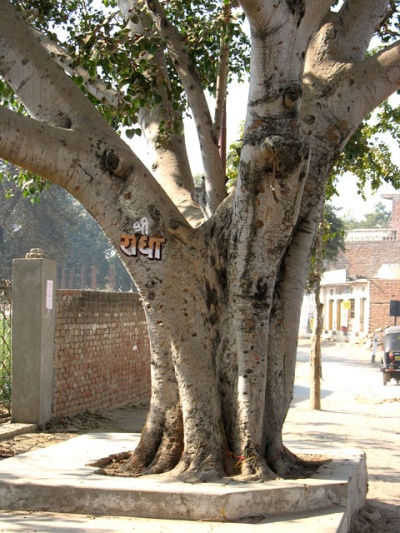 Во Вриндаване имя Радхарани написано на каждом дереве, на столбах и стенах