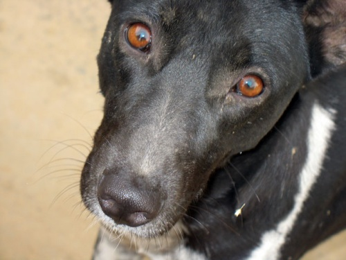 Собака из Вриндавана