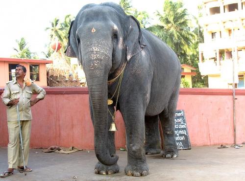 Слониха Субхадра
