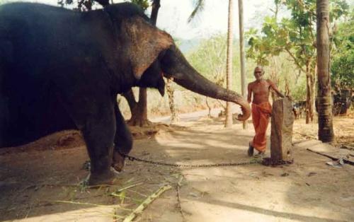 слон три :)