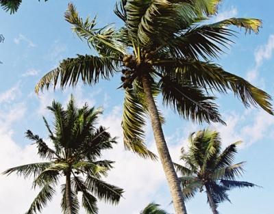 Первое, что я увидела, впервые подлетая к Острову, были вихрастые макушки пальм - с тех пор они для меня образ Ланки.