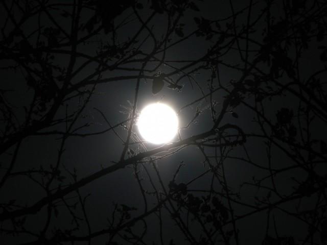 Зимняя луна 2