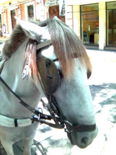 Пасажирский лошадь