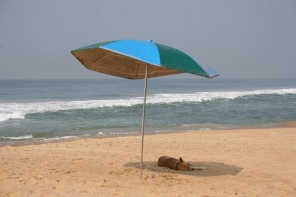Собака на сен... песке