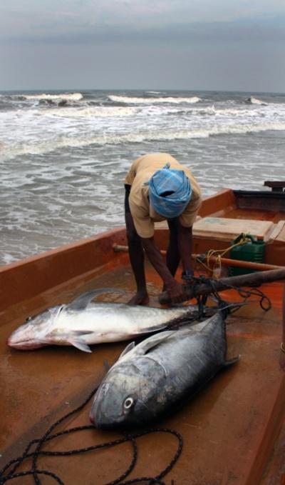 Рыбка в Мамаллапураме (тунец)
